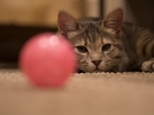 Catcafe19 (1 of 1)